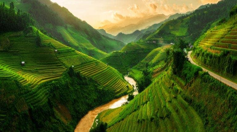 Roadtrips met vrienden - Rijsveld in Vietnam